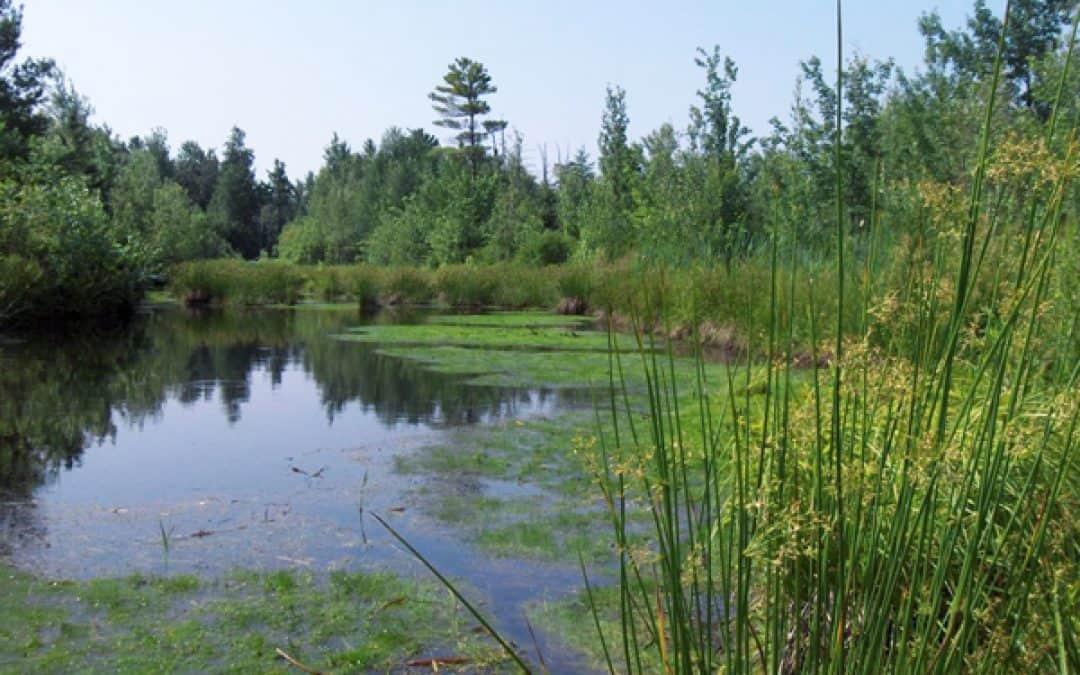 La MRC de Vaudreuil-Soulanges lance une consultation en ligne dans le cadre de l'élaboration de son Plan régional des milieux humides et hydriques